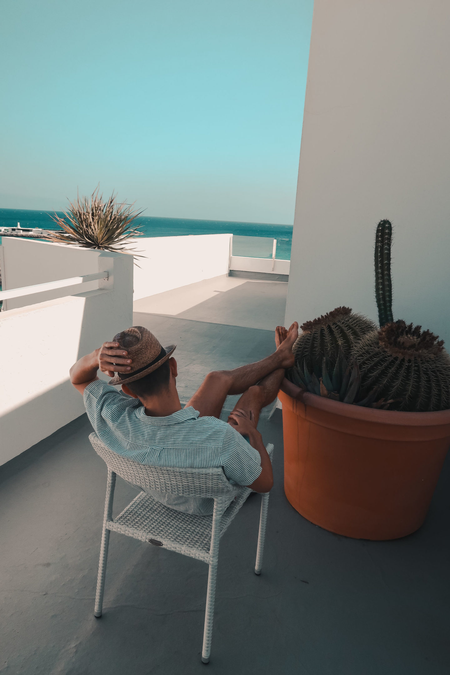 mr carrington cactus